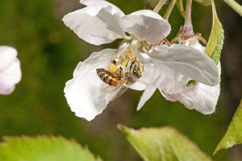 Bees face heavy pesticide peril from drawn-out sources