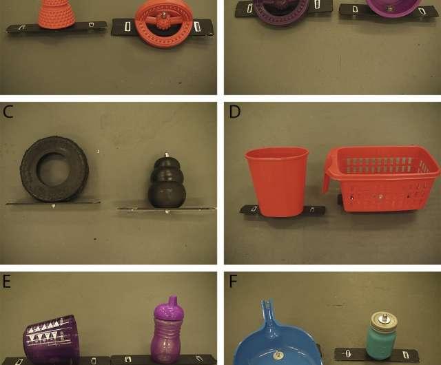 Behavior study shows piglets prefer new toys