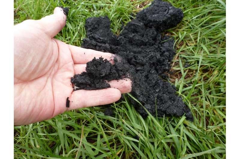 Biochar shows benefits as manure lagoon cover