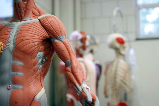 Biomedical researchers suggest using robots to grow human tissue