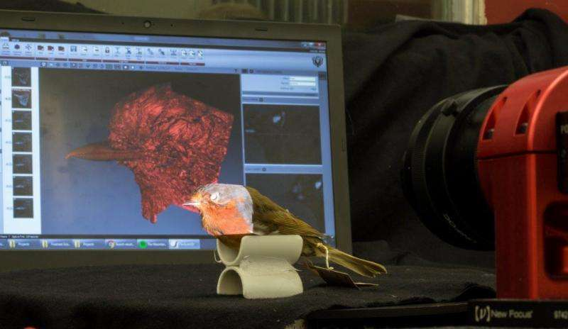 Bird lovers help scientists discover secrets of beak evolution