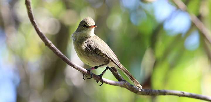 Birds reveal the importance of good neighbours for health and ageing