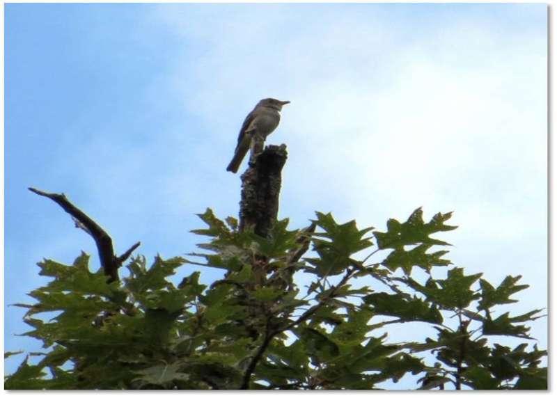 Birds sing shorter songs in response to traffic noise
