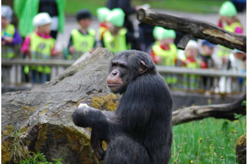 Both chimpanzees and humans spontaneously imitate each other's actions