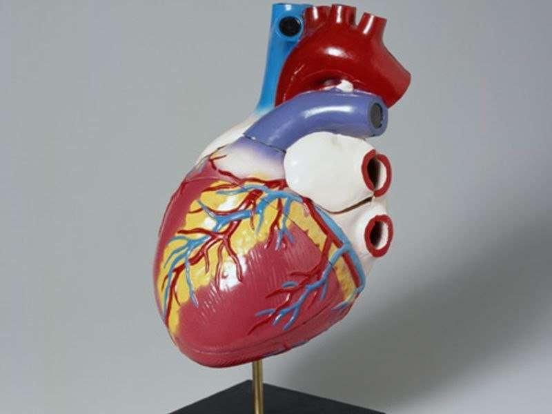 Brain measures tied to atrial pressure in valvular heart dz