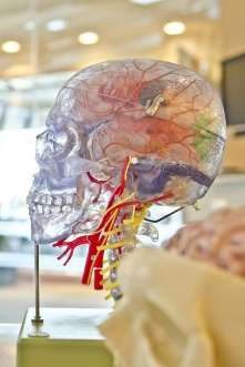 Brain's connections which keep related memories distinct from each other, identified in new study