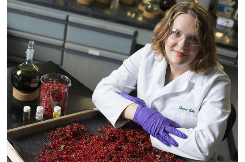 Brazilian peppertree packs power to knock out antibiotic-resistant bacteria