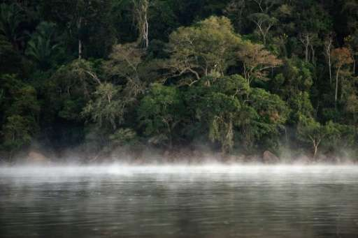 Brazil is the country with the most diverse tree population, with 8,715 species, according to the Botanic Gardens Conservation I