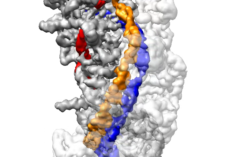 Bringing CRISPR into focus