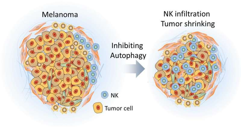 Bringing natural killer cells to the tumor battlefield