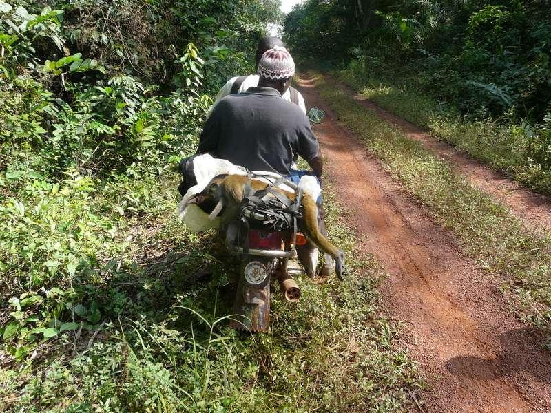 Bushmeat consumption decreases during the Ebola epidemic