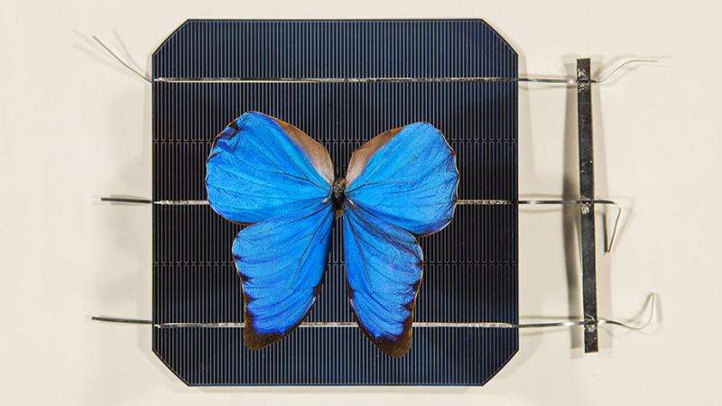 Butterfly wings inspire invention that opens door to new solar technologies»