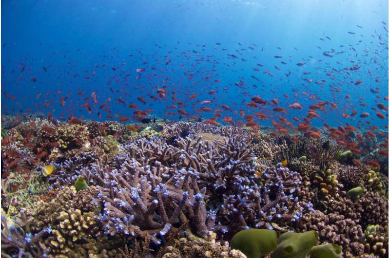 California Academy of Sciences advancing hope for reefs in the Philippines