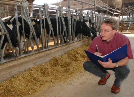 Calves conceived in winter perform better