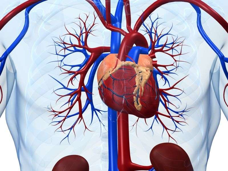 Cardiorespiratory fitness impacts BMI-related heart failure risk