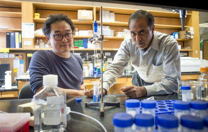 Castration-resistant prostate cancer cell growth impeded by endostatin