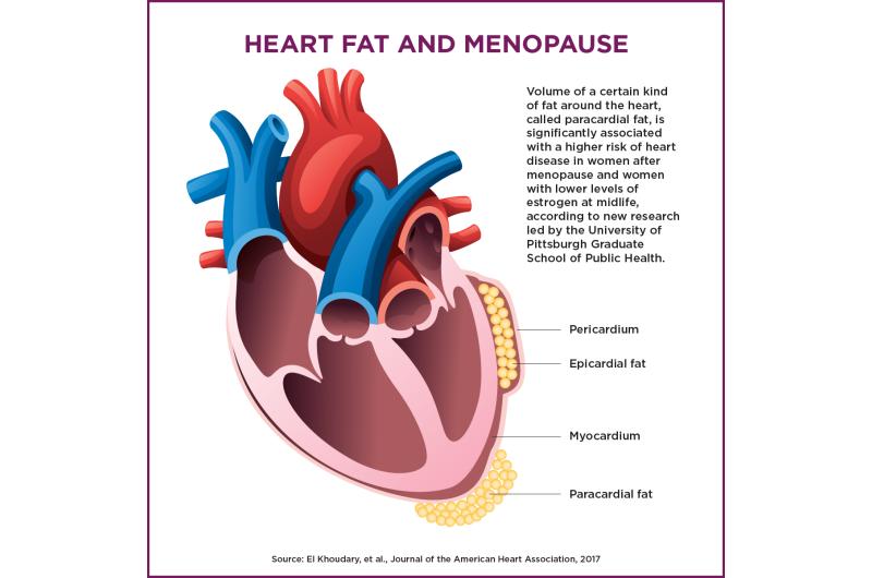 Certain heart fat associated with higher risk of heart disease in postmenopausal women