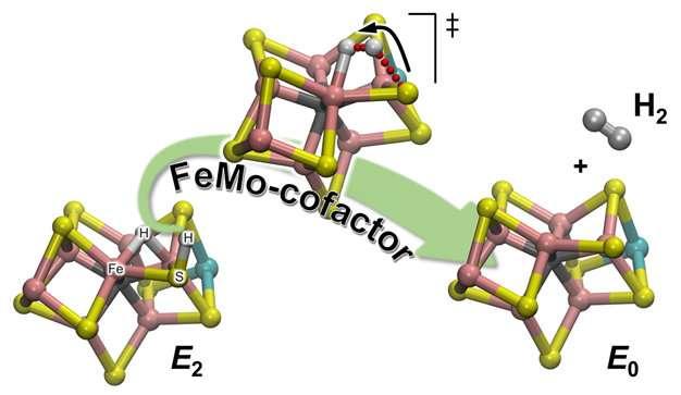Chemists reveal one mechanism of dihydrogen production by nitrogenase