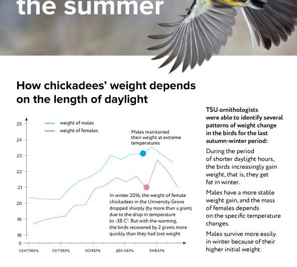 Chickadees also lose weight in the summer