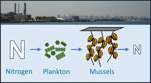 Cleaning up aquatic pollution with mussels