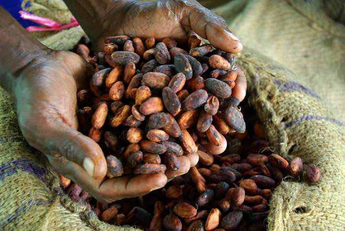 Clues to the innate drug resistance of a cocoa-fermenting pathogen