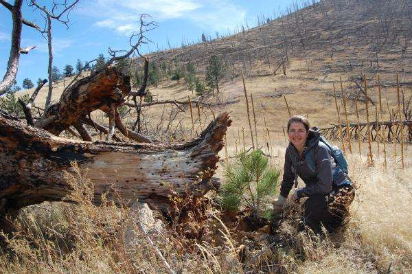 Colorado's wildfire-stricken forests showing limited recovery