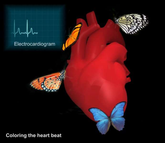 Coloring the heartbeat