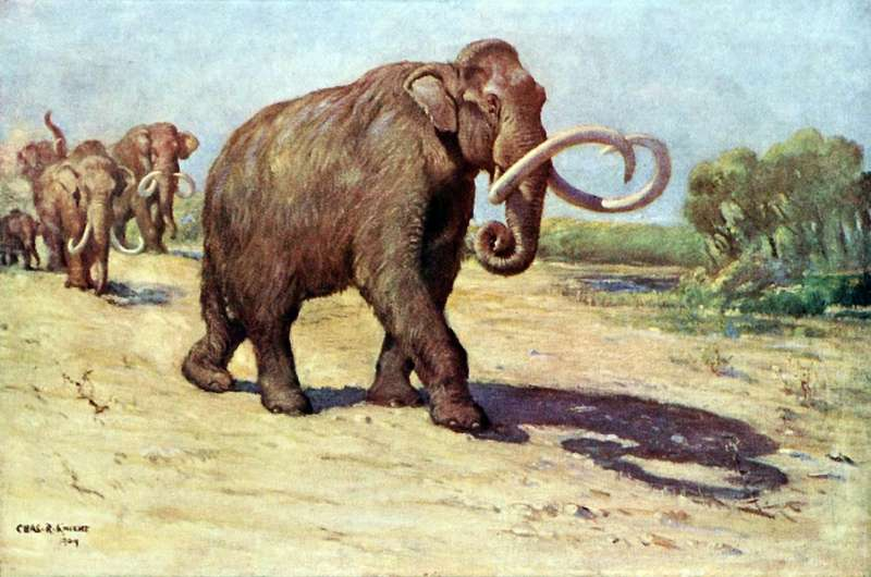 Columbian mammoth (Mammuthus columbi).