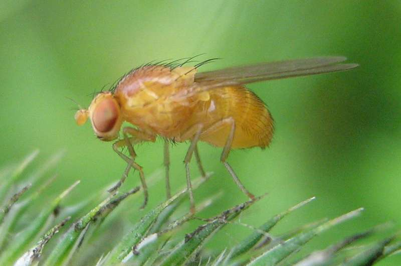 Common artificial sweetener likely a safe, effective birth control and pesticide