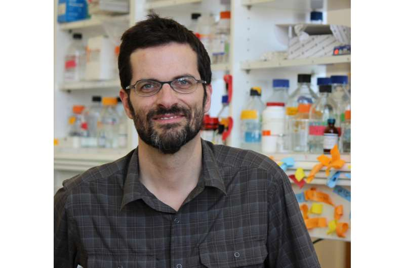 Connecting the dots between insulin resistance, unhealthy blood vessels and cancer
