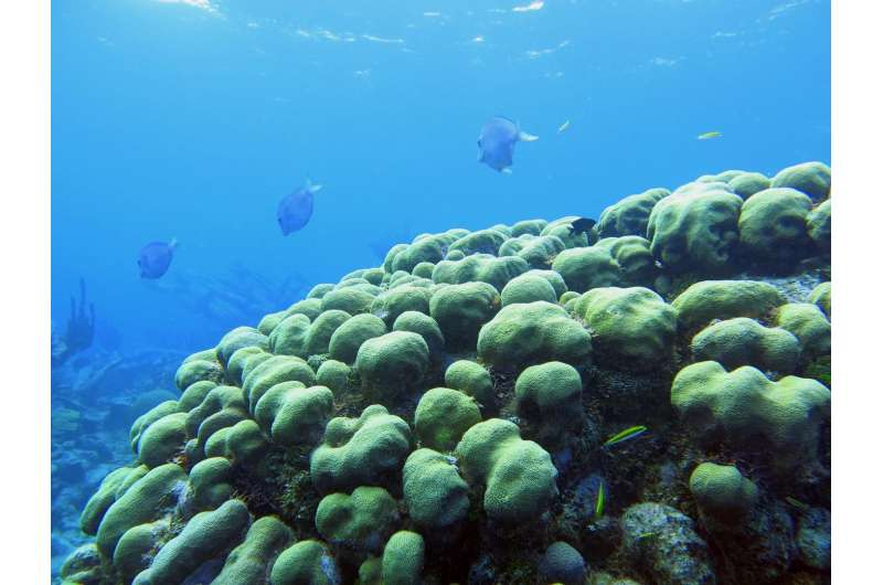 Coral disease outbreaks fluctuate with El Niño years, new research finds