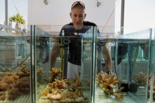 """Corals in the Gulf of Eilat are """"very resilient to high temperature changes and most likely going to be the last to survive"""