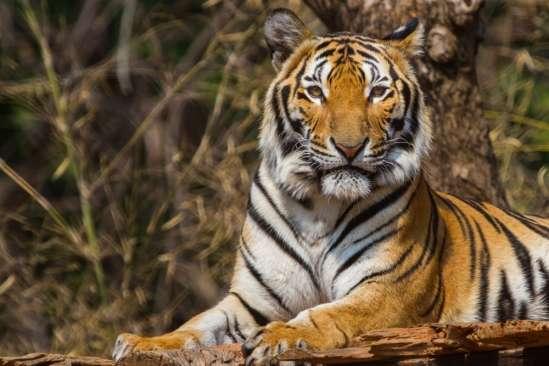 Cornering endangered species
