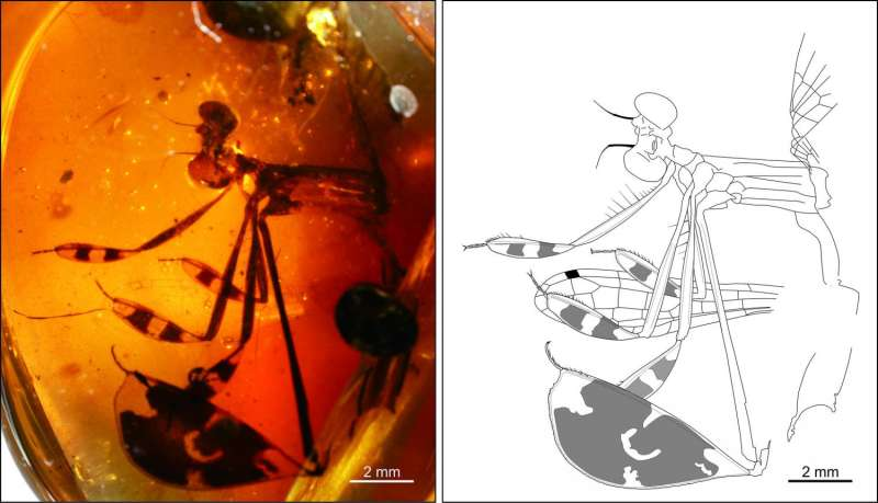 Courtship behavior trapped in 100-million-year-old amber