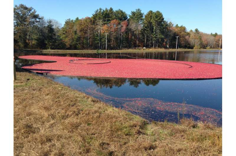 Cranberry growers tart on phosphorus