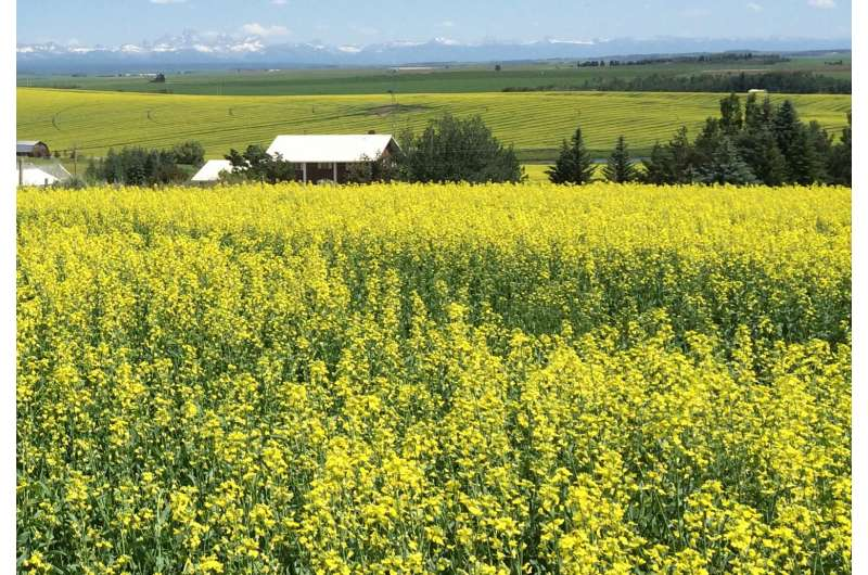 Cultivating cool-for-cash-crop