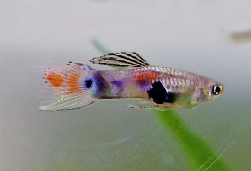 Current understanding of animal welfare currently excludes fish, even though fish feel pain