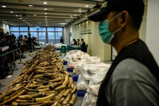 Customs officers in Hong Kong have seized more than seven tonnes of ivory with an estimated market value of US$9 million, the ci