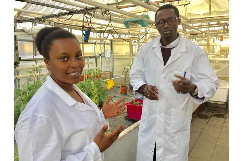 Deciphering plant immunity against parasites