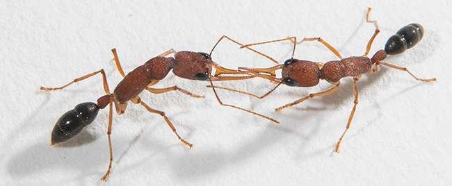 Decoding ants' coat of many odors