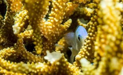 Degrading coral reefs bad news for commercial fishing