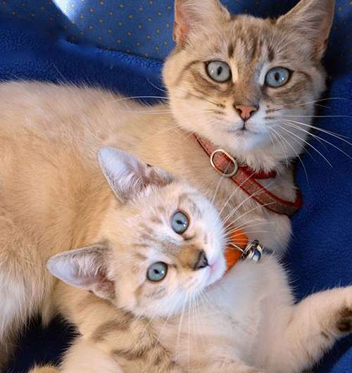 Delayed weaning reduces behavioural problems in cats