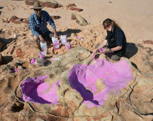Dinosaur tracks recently discovered in Western Australia include some of the largest tracks ever recorded