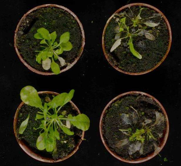 Discovered a key mechanism in the plant defense against fungal infections