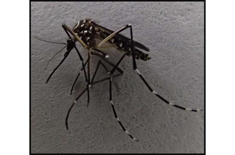 Disease-carrying mosquitoes rare in undisturbed tropical forests