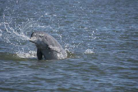 Diving deep into the dolphin genome could benefit human health