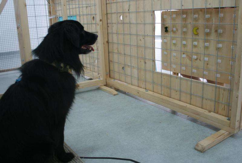 Dogs share food with other dogs even in complex situations