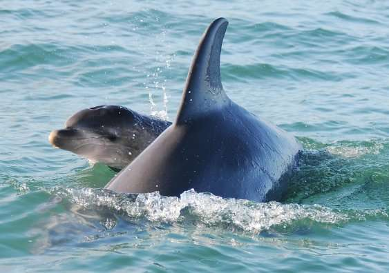 Dolphin and bear studies pave the way to improved population forecasting