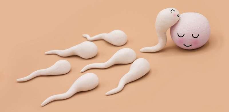 Do men need sperm health supplements?