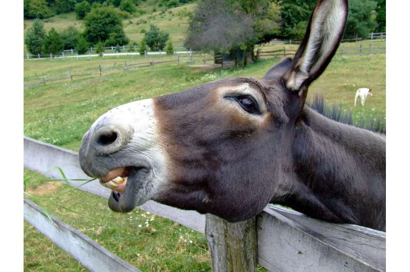 Donkeys need more protection from winter than horses